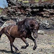 Icelandic Black Stallion, Iceland Art Print