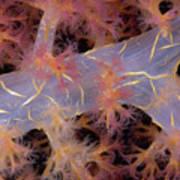 Indonesia, Marine Life Art Print by Dave Fleetham - Printscapes