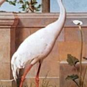 kb Marks Henry-Indian Crane Bullfinch and Thrush Henry Stacy Marks Art Print