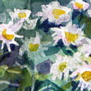 Little Asters Art Print