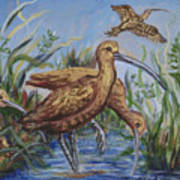 Longbilled Curlews Art Print
