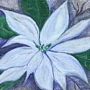 Midnight Poinsettia Art Print