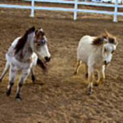 Miniature Horse Art Print