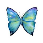 2 Morpho Aega Butterfly Art Print