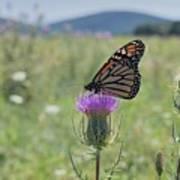 Mountain Meadow Monarch Art Print