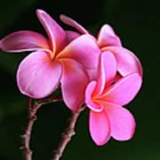 Na Lei Pua Melia Aloha He Ala Nei E Puia Mai Nei Pink Plumeria Art Print