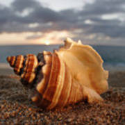 North Shore Seashell Art Print