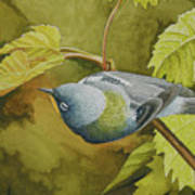 Northern Parula Art Print
