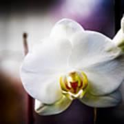 Orchid Art Print