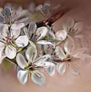 Oriental Pear Blossom Art Print