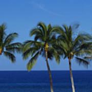 Palm Tree Tops Art Print