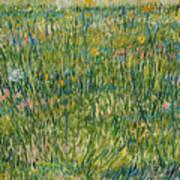 Patch Of Grass Art Print