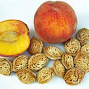 Peaches And Pits Art Print