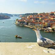 Porto Skyline Seagull Art Print
