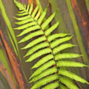 Rainbow Eucalyptus And Fern Art Print