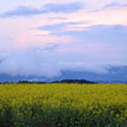 rapeseed field in Brnik with Kamnik Alps in the background Art Print