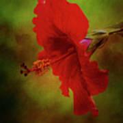 Red Hibiscus Art Art Print