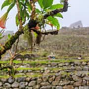 Ruins Of  Machu Picchu Art Print