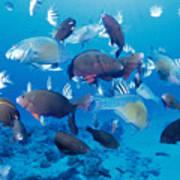 Saipan Marine Life Art Print