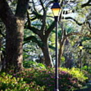 Savannah Spring Perspective Art Print