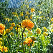 Spring Flowers In The Rain Art Print