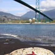 Starfish Stanley Park Vancouver Art Print