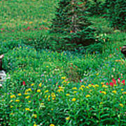 Stream And Alpine Flowers, Ouray Art Print