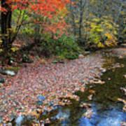 Sugar Maple Birch River Art Print