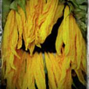 Sunflower 1134 Art Print