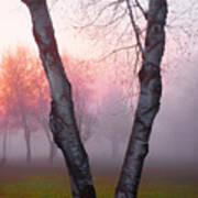Sunrise Trees Fog Art Print