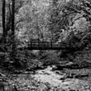 Swan Creek Park Art Print