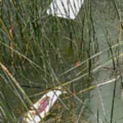 The Lodge At Blue Lakes Decaying Fish Art Print