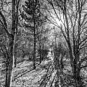 The Peaceful Forest  Art Print