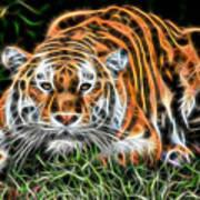 Tiger Collection Art Print