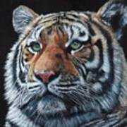 Tiger Portrait 2 Art Print
