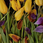 Tulips Wilting Art Print