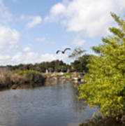 Turkey Creek In Palm Bay Florida Art Print
