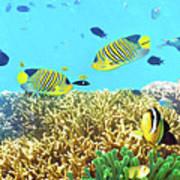 Underwater Panorama Art Print