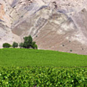 Vines Contrasting With Chiles Atacama Desert Art Print