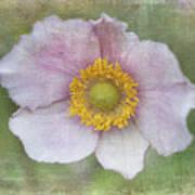 Windflower  Art Print