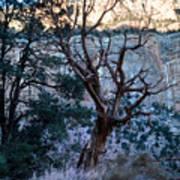 Winter At Grand Canyon Art Print