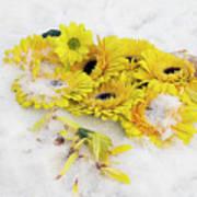 Yellow Gerbers Art Print