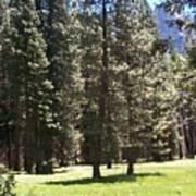 Yosemite Valley Floor Art Print