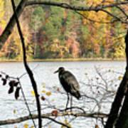 2006-heron Fall2009 Art Print