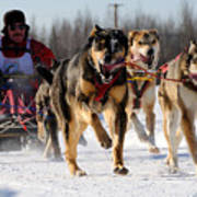 2011 Limited North American Sled Dog Race Art Print
