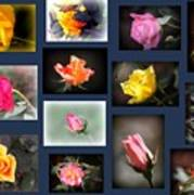 2014-03-16 - Rose Art Print