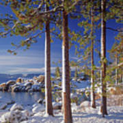 211257 Snow On Tree Sides Lake Tahoe Art Print