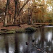 New Forest - England Art Print
