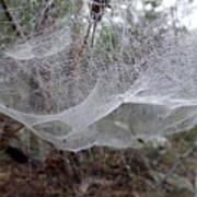 Australia - Concave Spider Web Art Print