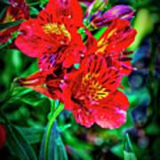 2647- Red Flowers Art Print